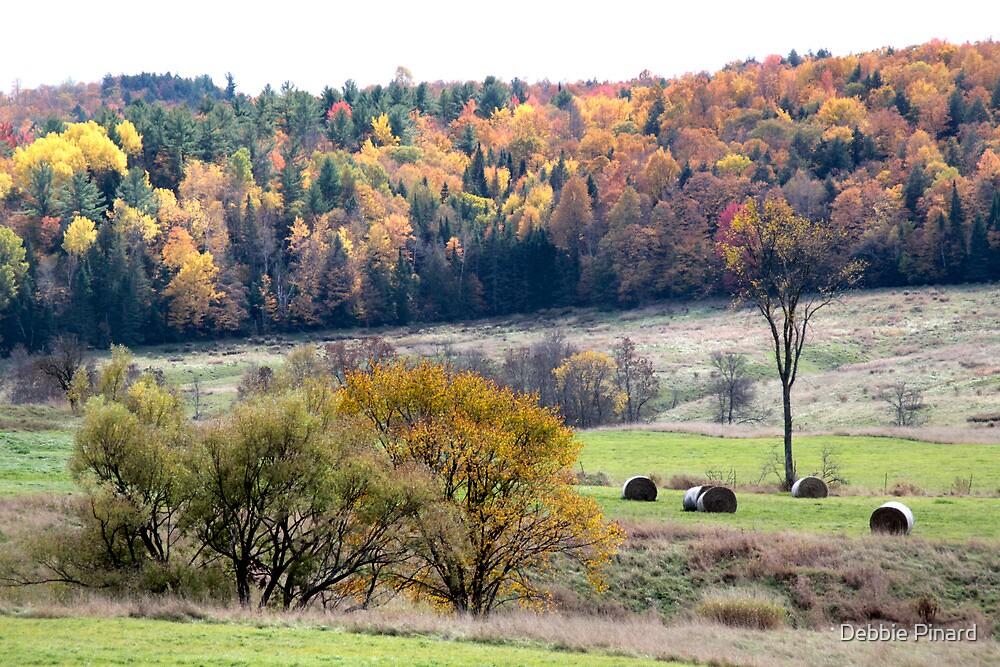 Fall in Gatineau Park - Gatineau Quebec by Debbie Pinard