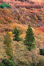 Ard Autumn (1) by Karl Williams