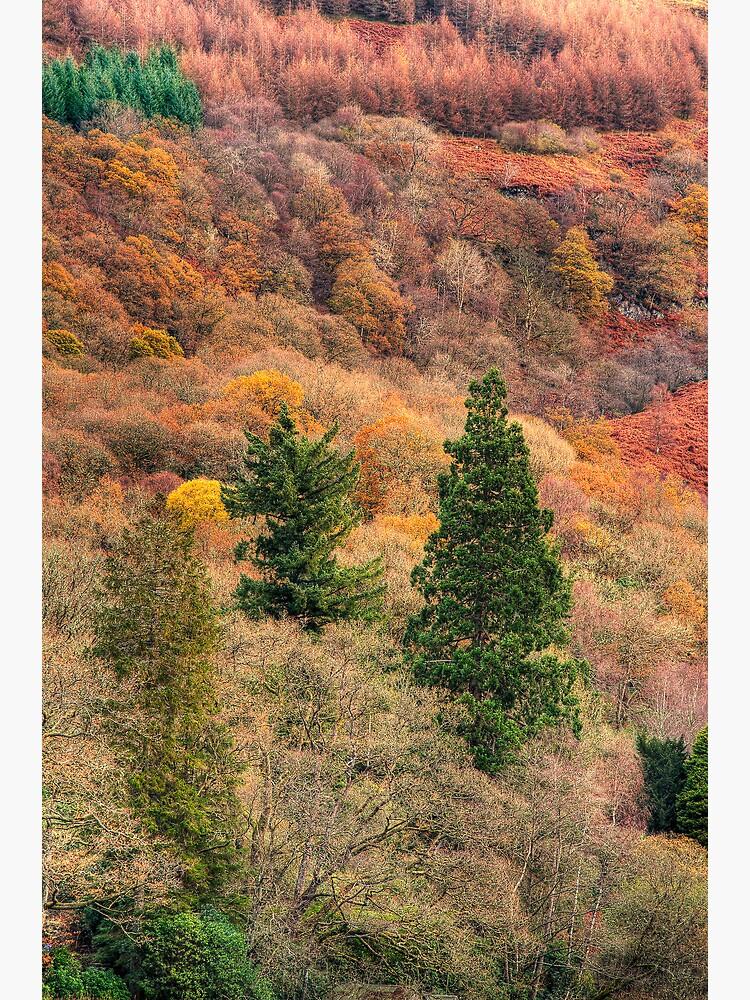 Ard Autumn (1) by Shuggie