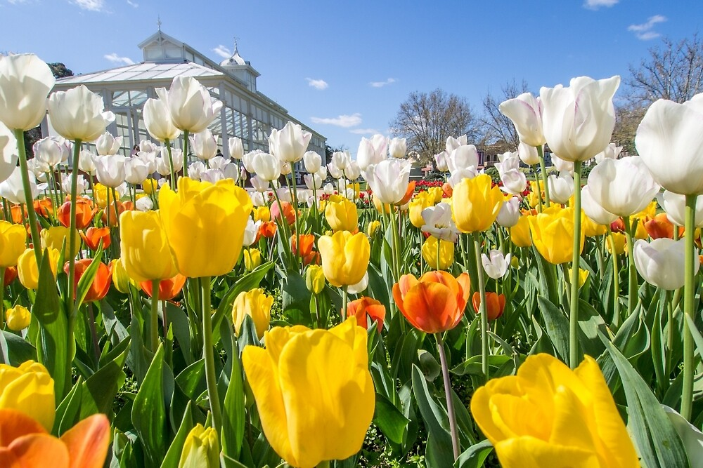 Spring Colours by Joel Bramley