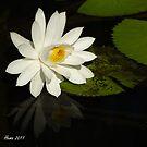 Lily by dhmielowski