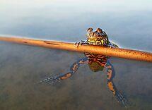 The Proud Frog by Istvan Natart