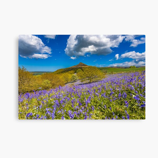 Roseberry Topping Bluebells Canvas Print