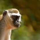 0373 Monkey Business by DavidsArt