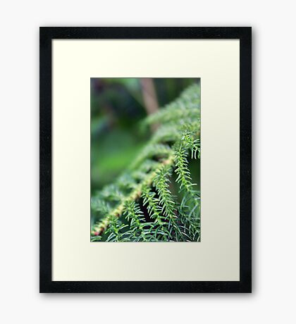 Greens Framed Print