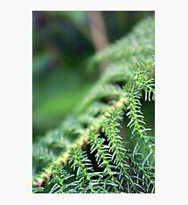 Greens Photographic Print