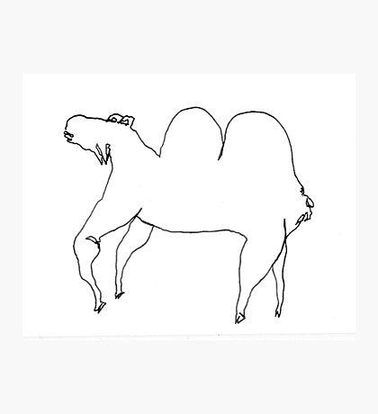 Bactrian Camel Photographic Print