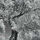 untitled - tree by jackson photografix
