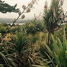 Nature of Ireland by lisaLK