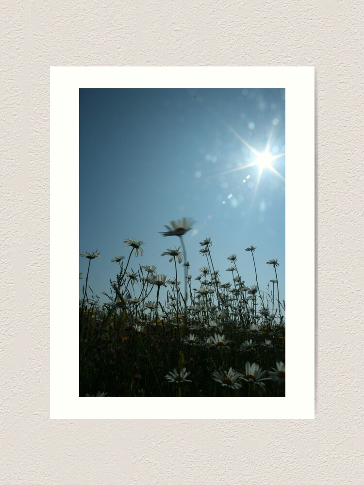 Alternate view of Daisies Art Print