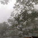 Jungle Mist in Laos by Betsy  Seeton