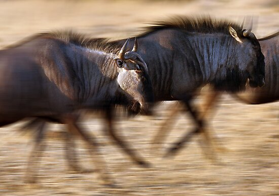 On the move by Sharon Bishop