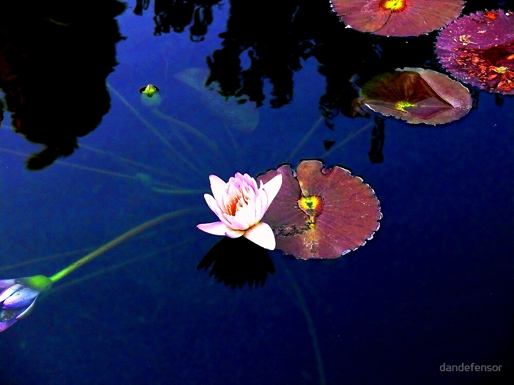 water lily #9 by dandefensor