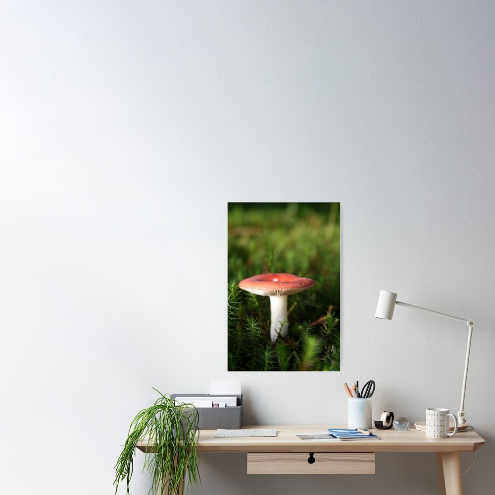 Toadstool Poster