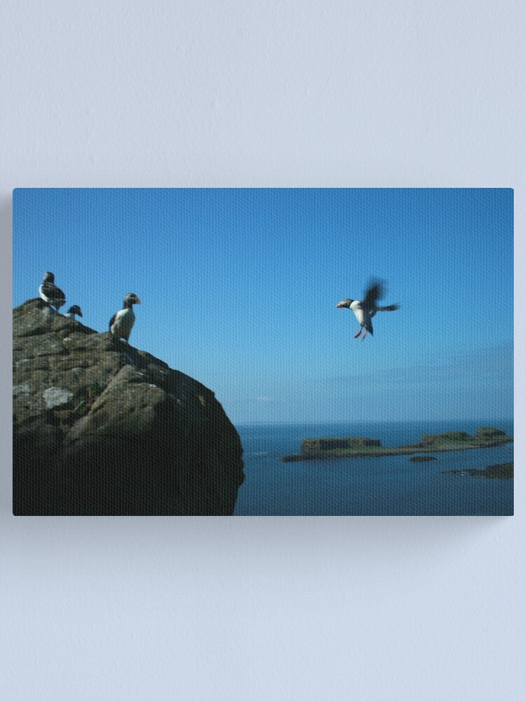 Alternate view of Puffin landing Canvas Print
