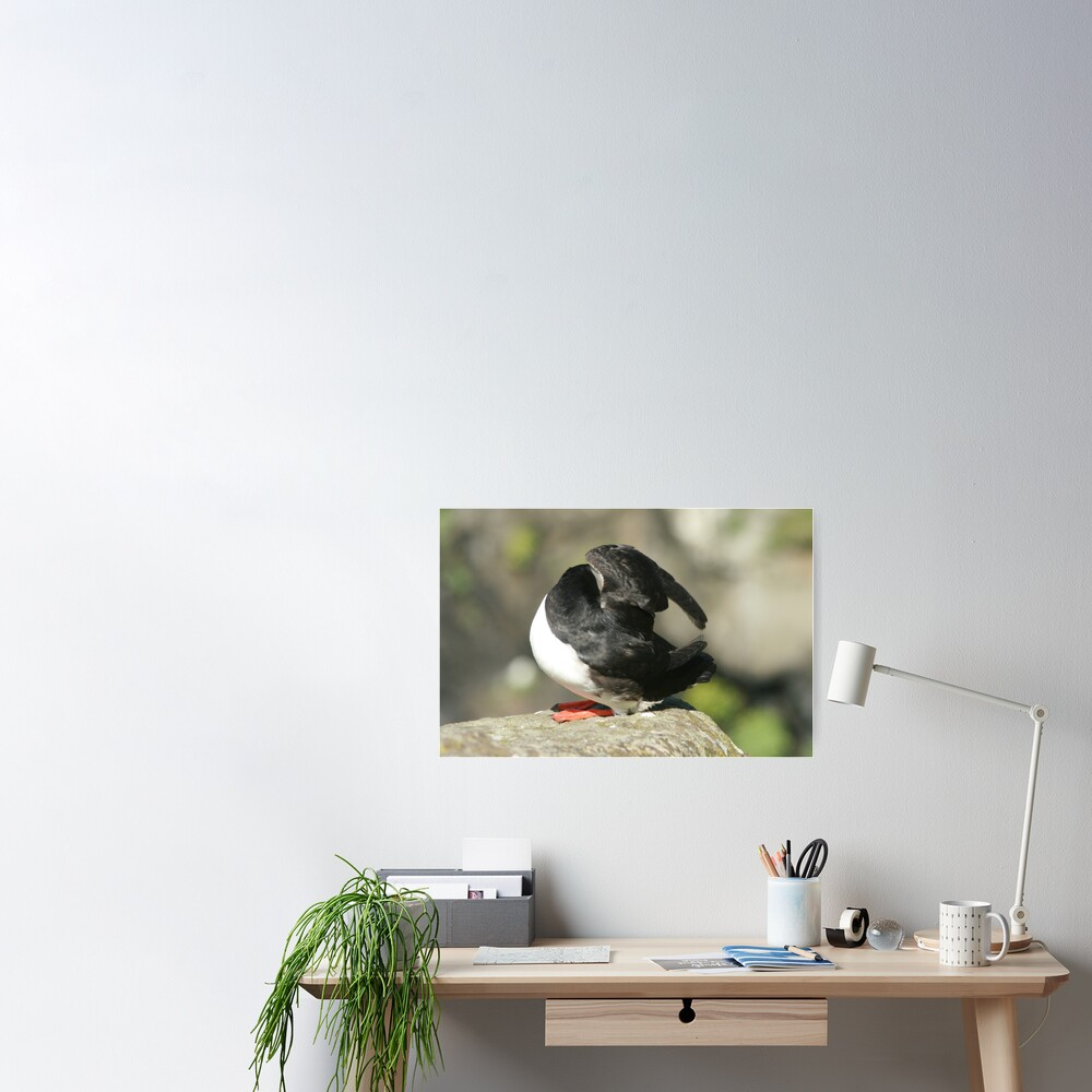 Shy Puffin Poster