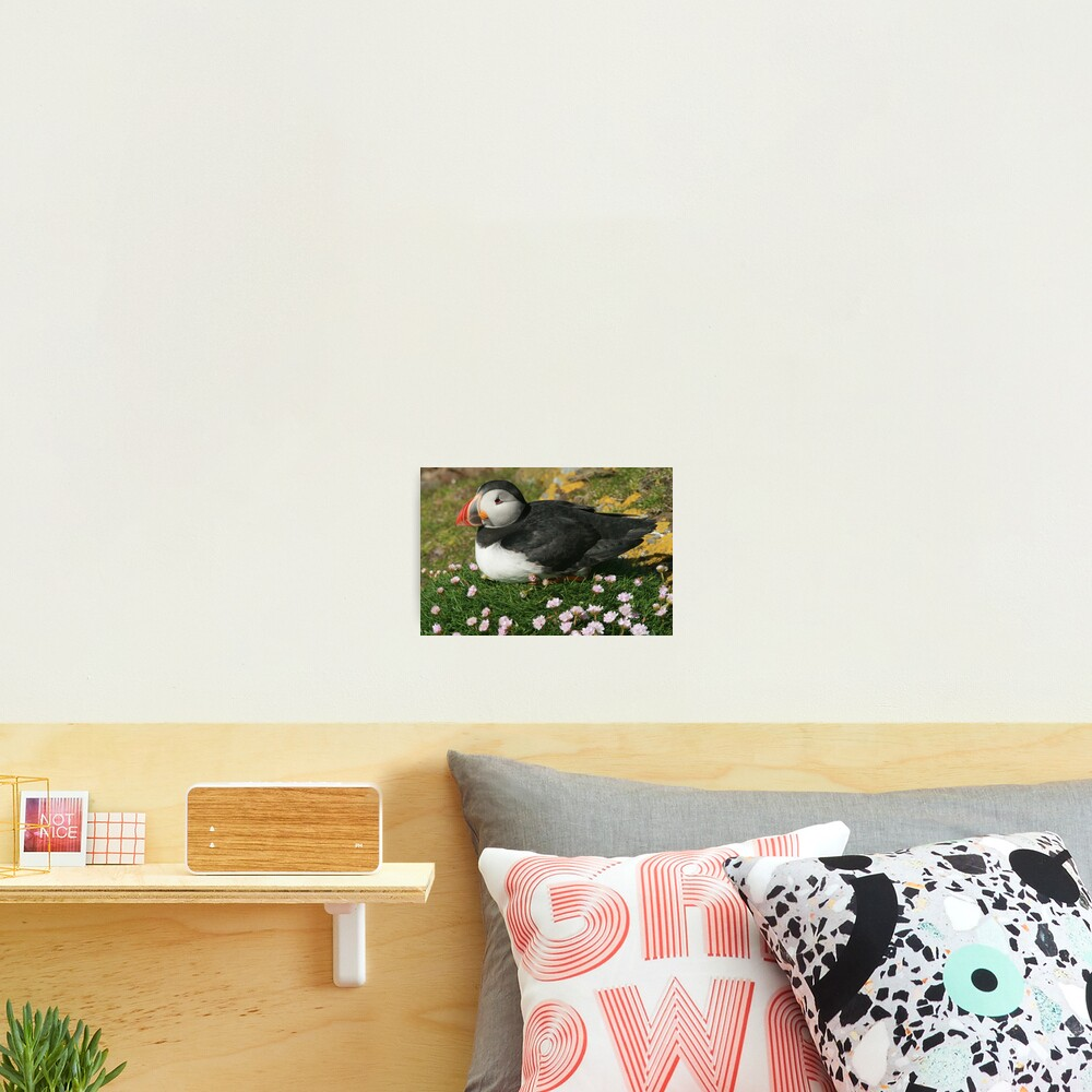 Puffin in the pinks Photographic Print