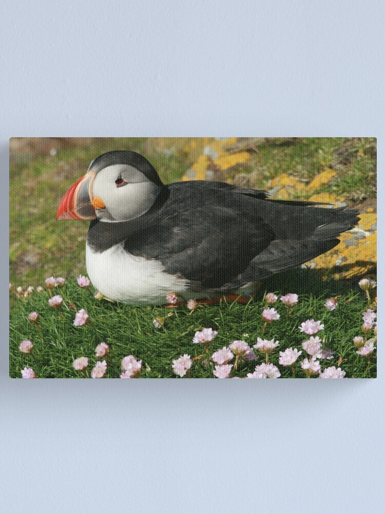 Alternate view of Puffin in the pinks Canvas Print