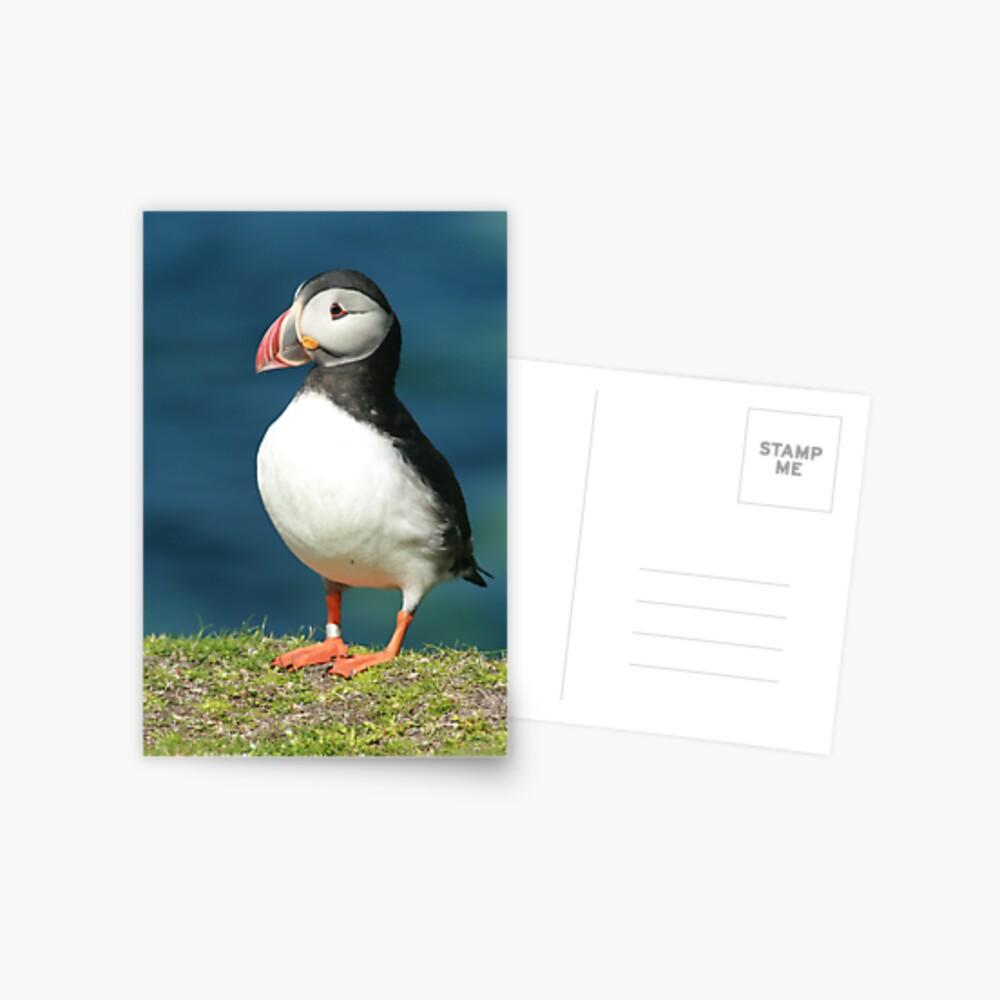 Posing Puffin III Postcard