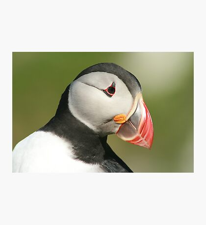 Posing Puffin II Photographic Print
