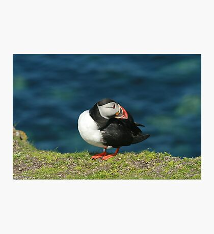 Posing puffin Photographic Print