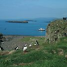 Puffins on Lunga by Fiona MacNab