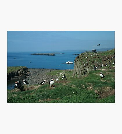 Puffins on Lunga Photographic Print