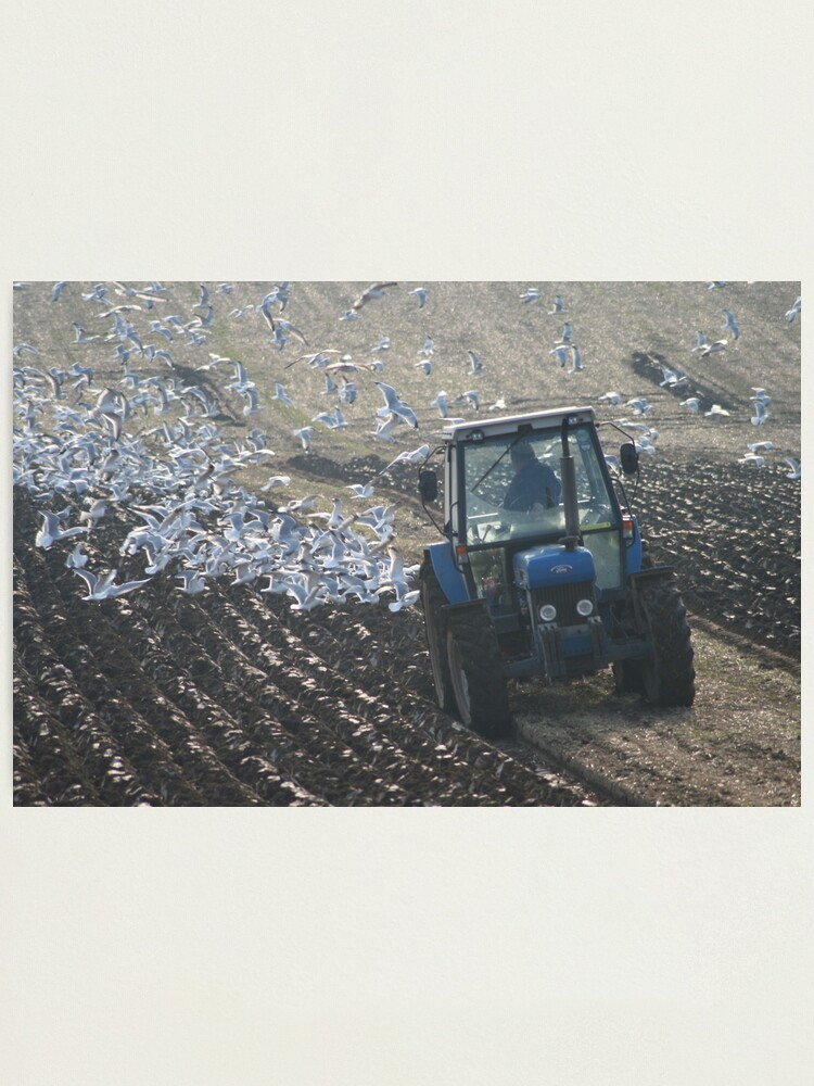 Alternate view of Ploughing Match Photographic Print