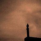 Mockingbird - Standing Watch by glennc70000