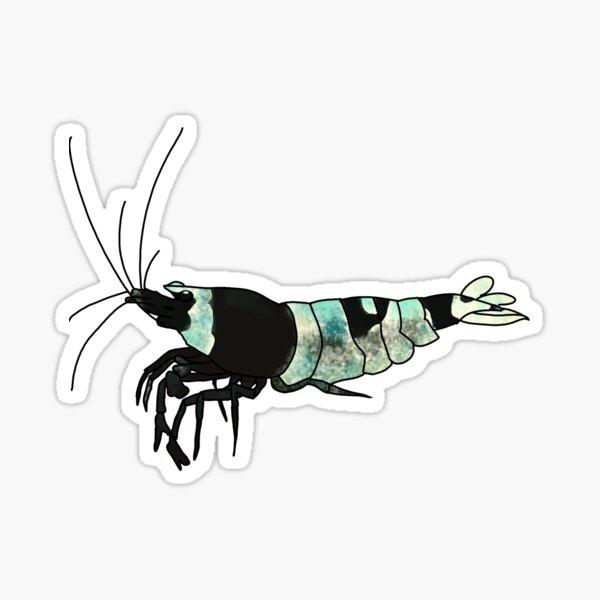 Black Bee Shrimp Sticker