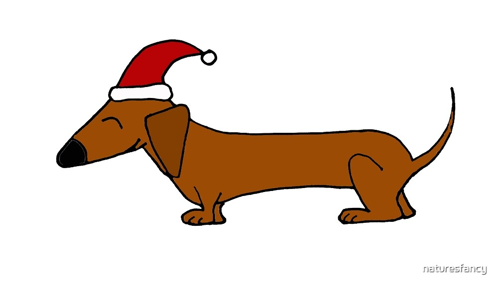 Funky Cool Dachshund Wearing Santa Hat by naturesfancy