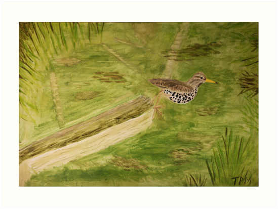 Spotted Sandpiper on the Kinnickinnic River by Thomas Murphy