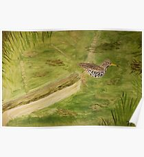 Spotted Sandpiper on the Kinnickinnic River Poster