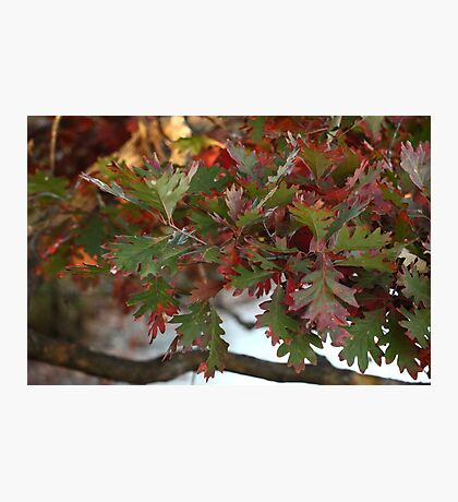 Red and Green Leaves over the Oconomowoc River Photographic Print