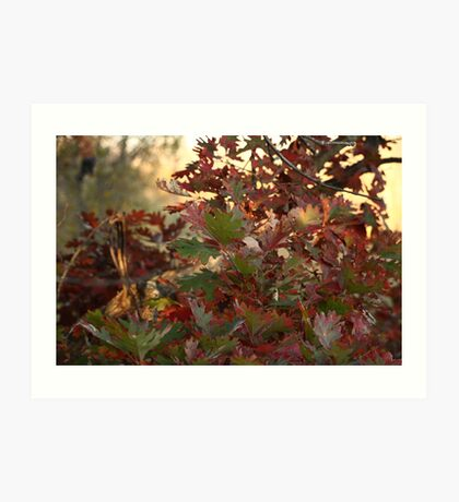 Red and Green Fall Leaves II Art Print