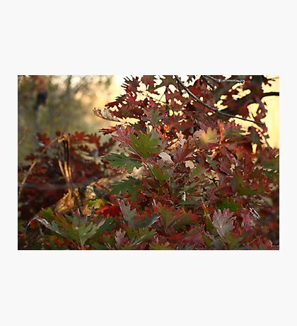 Red and Green Fall Leaves II Photographic Print