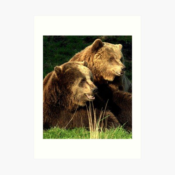 Bear pair Art Print
