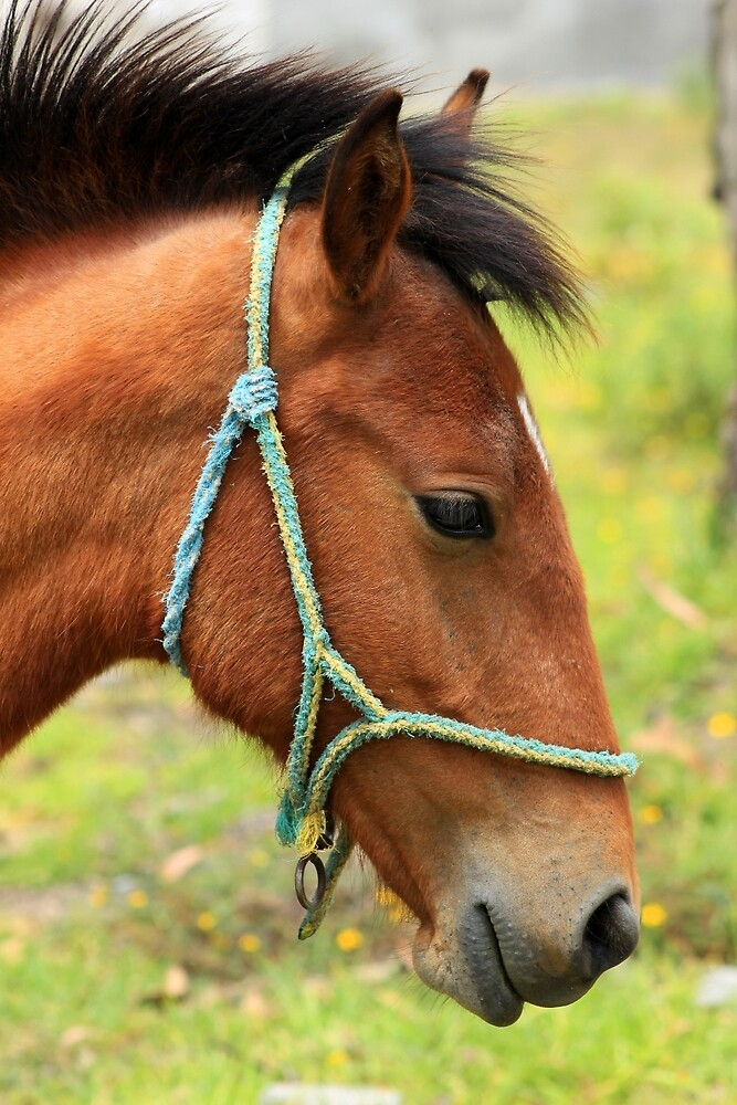 Young Horse With Bridle by rhamm