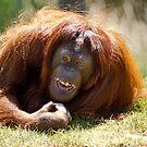 orangutan in the grass by Garry Gay
