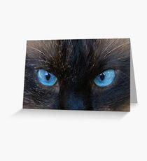 Maliboo...a blue eye'd cutie Greeting Card