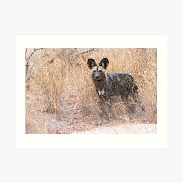 The dog with the ears Art Print