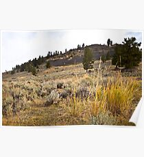 Morning in Lamar Valley Poster