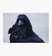 Portrait of a Raven Photographic Print
