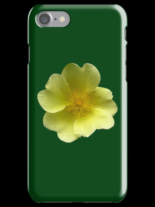 """Potentilla fruticosa """"Elizabeth"""" for iPhone by Philip Mitchell"""