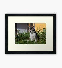 Sweet Kitten Framed Print
