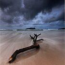 Fingal Heads Driftwood - Fingal Heads - Northern NSW - Australia by Soren Martensen
