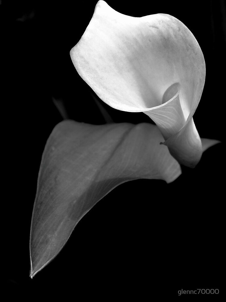 Monotone Bloom by glennc70000