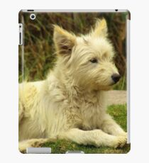White Shaggy Dog iPad Case/Skin
