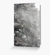 Trees and Snow, Petworth Park. Greeting Card