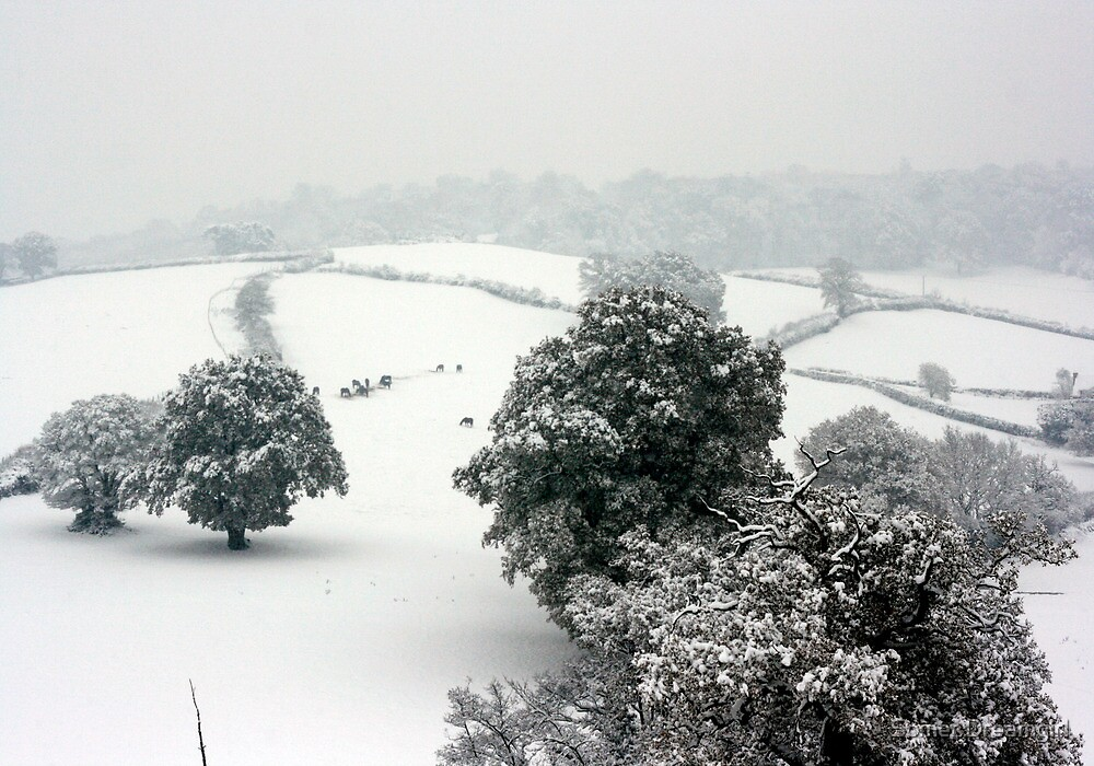 Snowy Rolling Fields, Petworth. by Emma S